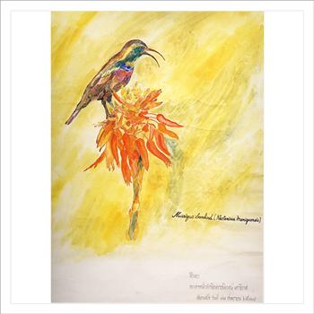 นกมาริกัว ซันเบิร์ด